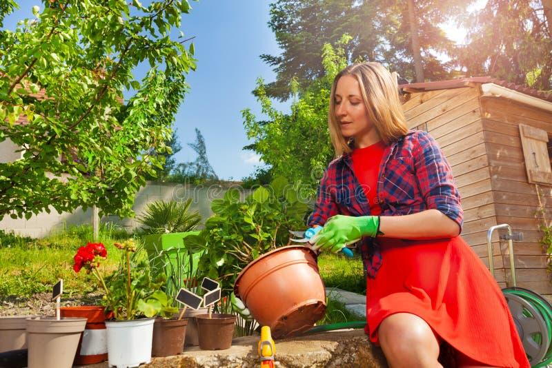 Plantas de corte bonitas da mulher com tesoura de podar manual do jardim imagens de stock