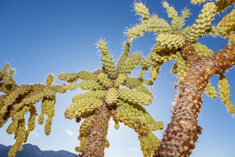 Plantas de deserto imagens de stock