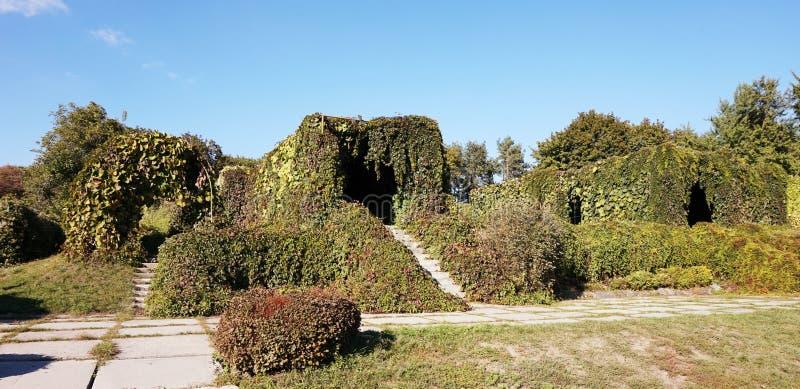 Plantas de escalada da aleia no jardim botânico em Kiev foto de stock royalty free