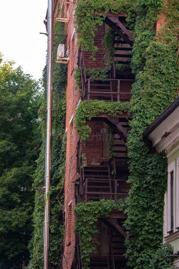plantas de escalada nas escadas do metal do fogo de uma construção de tijolo fotos de stock