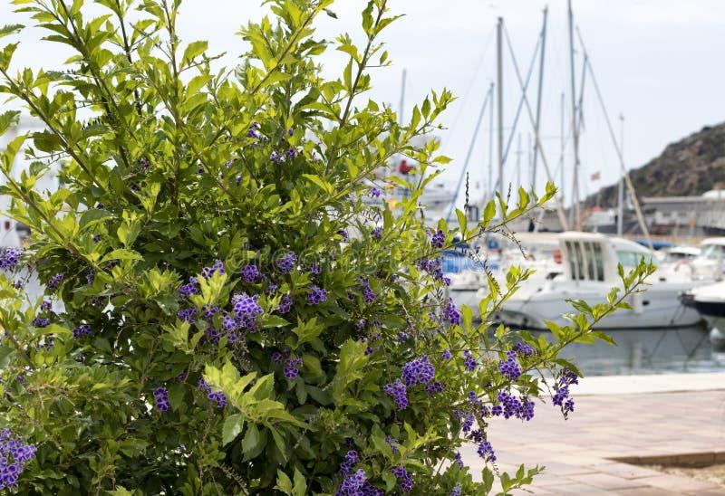 Plantas de florecimiento delante de los barcos foto de archivo