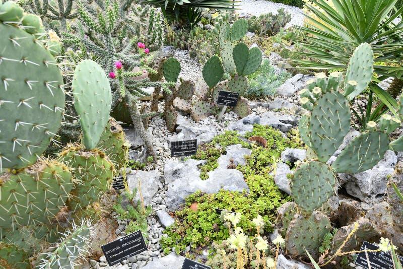 Plantas de florecimiento de las angioespermas fotos de archivo