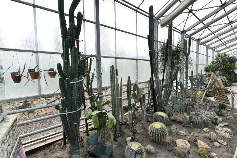 Plantas de florecimiento de las angioespermas fotos de archivo libres de regalías