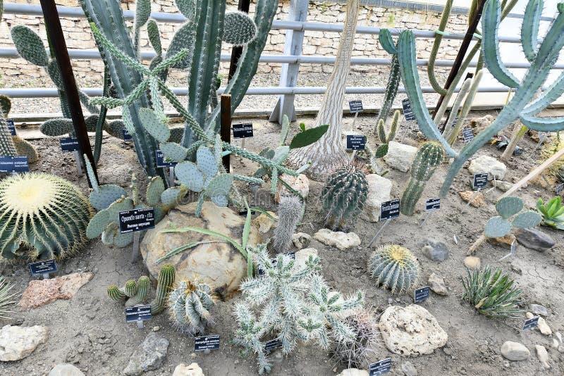 Plantas de florecimiento de las angioespermas foto de archivo