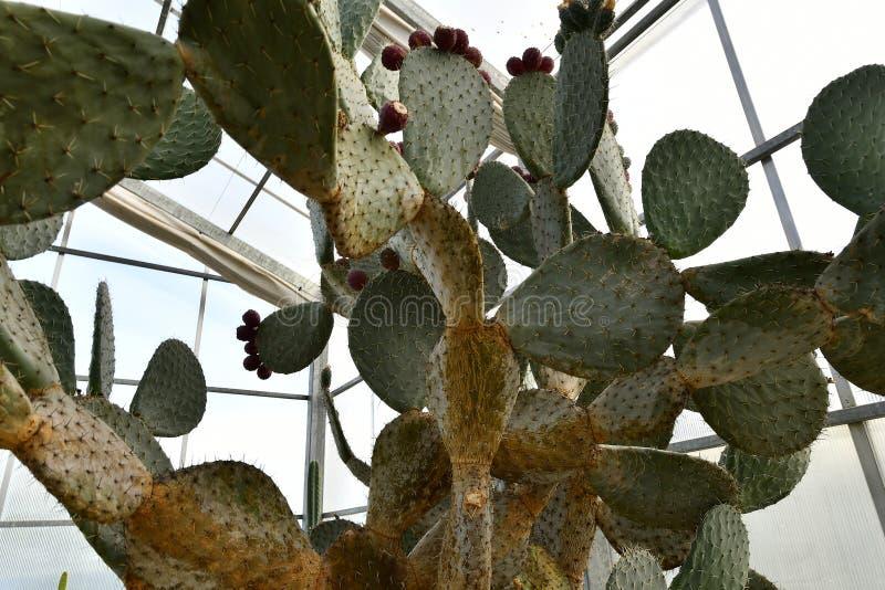 Plantas de florecimiento de las angioespermas imagen de archivo