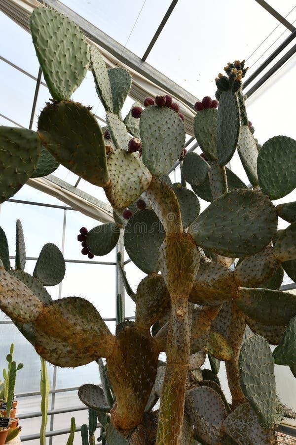 Plantas de florecimiento de las angioespermas fotografía de archivo