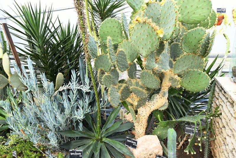Plantas de florecimiento de las angioespermas foto de archivo libre de regalías