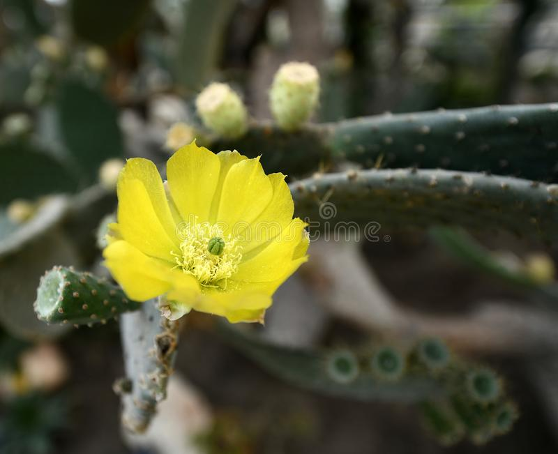 Plantas de florecimiento de las angioespermas imagenes de archivo