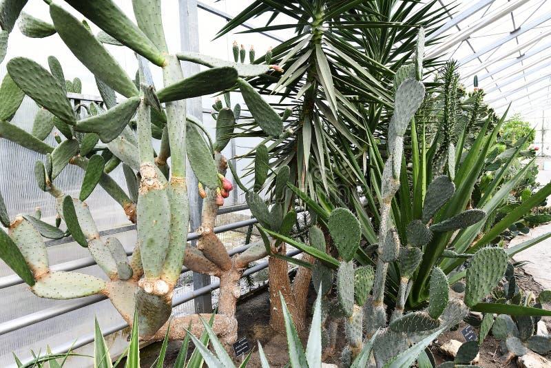 Plantas de florecimiento de las angioespermas fotografía de archivo libre de regalías