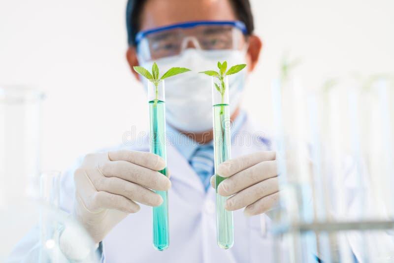Plantas de GMO dos testes imagem de stock