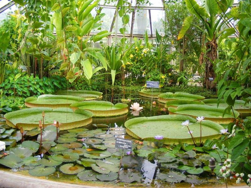 Plantas de invernadero en el tete d del jardín o el ` de Parc de la Tete d o en Lyon, Francia, lilas rosados del agua, loto jardí fotografía de archivo libre de regalías
