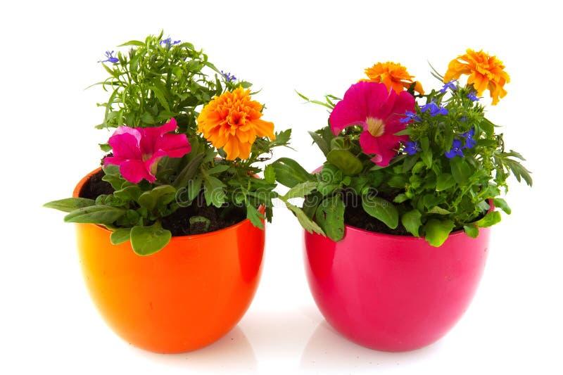 Plantas de jardín con las flores fotografía de archivo libre de regalías