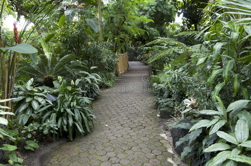 Plantas de jardín subtropicales foto de archivo