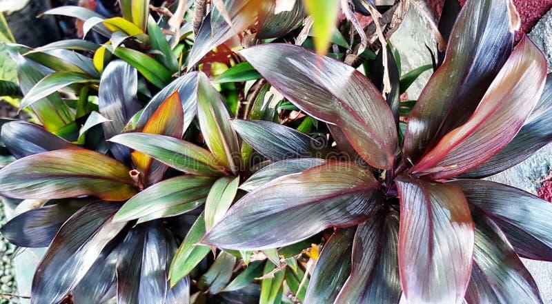 Plantas de jardim fotografia de stock royalty free