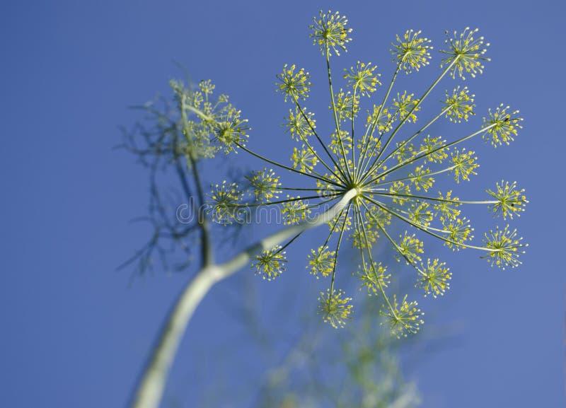 Plantas de la aspiración en el cielo foto de archivo