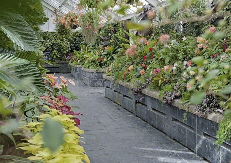 Plantas de la begonia crecidas en Begonia House en Wellington, Nueva Zelanda fotografía de archivo libre de regalías
