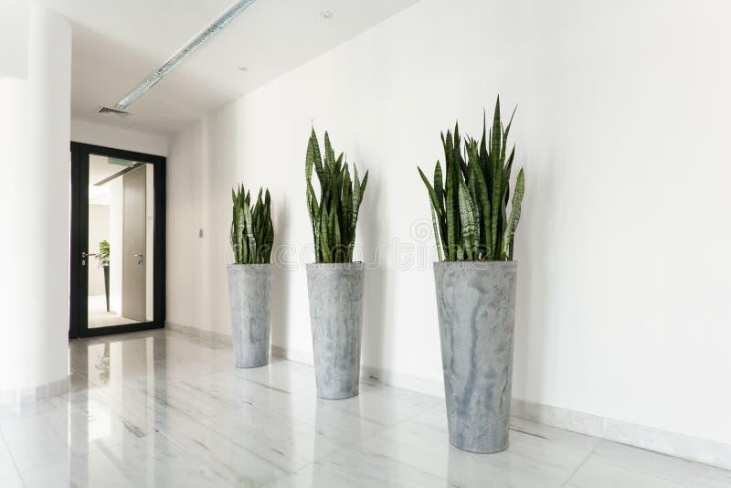 Plantas de la belleza en el pasillo fotografía de archivo