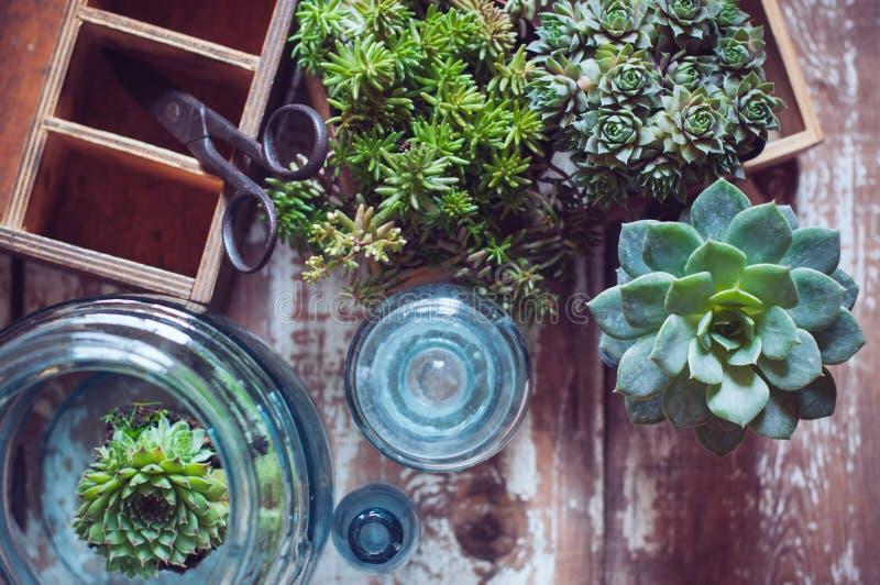 Plantas de la casa fotos de archivo