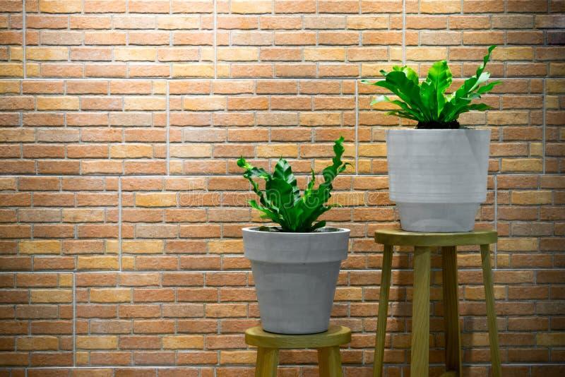 Plantas de la casa en fondo de madera de la teja de la silla y de la pared de ladrillo imagen de archivo