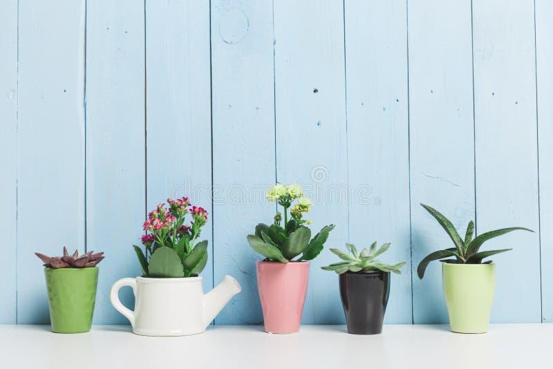 Plantas de la casa, succulents fotos de archivo libres de regalías