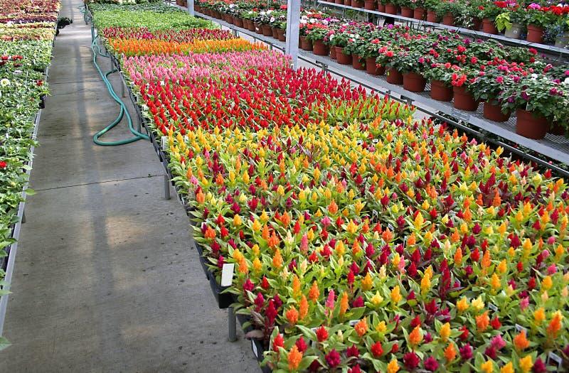 Plantas de la flor imágenes de archivo libres de regalías