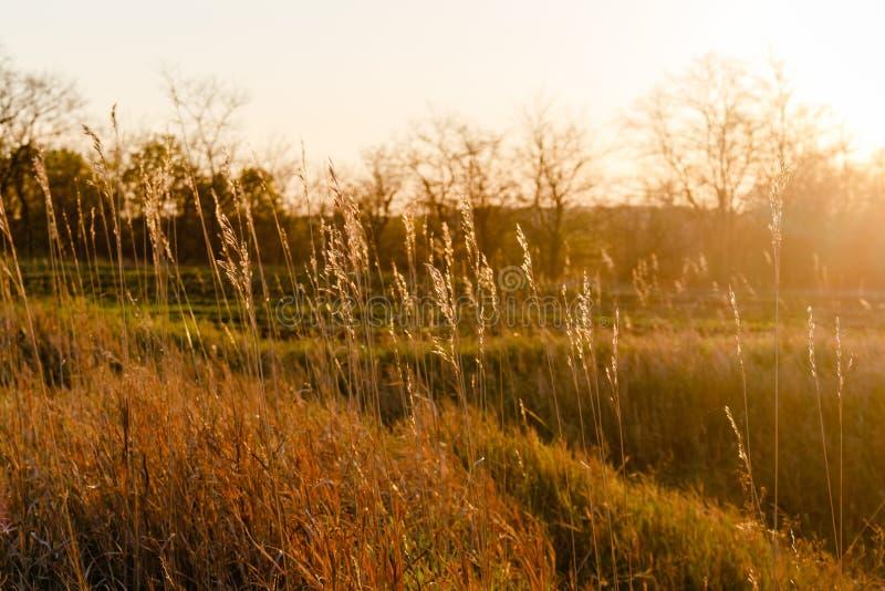 Plantas de la hierba contra una puesta del sol glaring Árboles sin fondo de las hojas foto de archivo libre de regalías