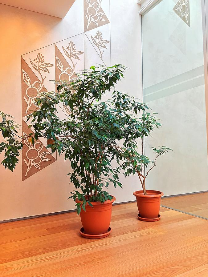 Plantas de la sala de espera foto de archivo libre de regalías