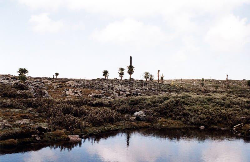 Plantas de Lobella imagen de archivo
