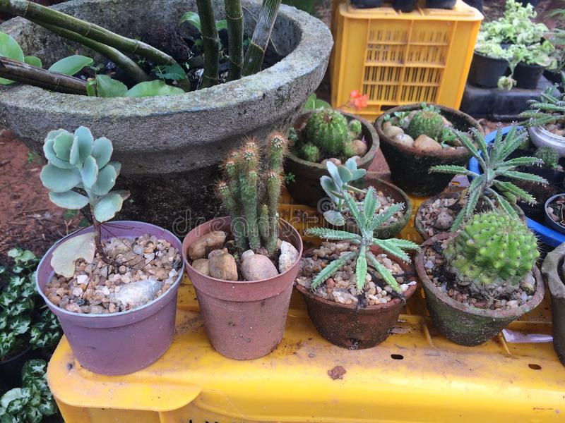 Plantas de los cactus de Naturel con de valor añadido imágenes de archivo libres de regalías