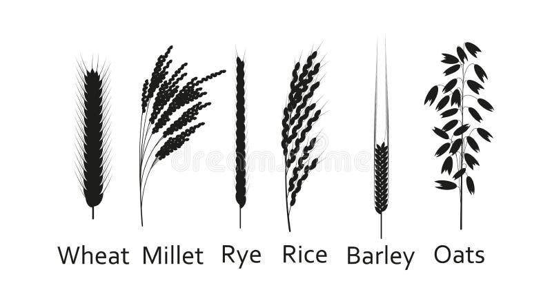 Plantas de los cereales fijadas Fuentes de los carbohidratos Ejemplo del vector de la silueta ilustración del vector