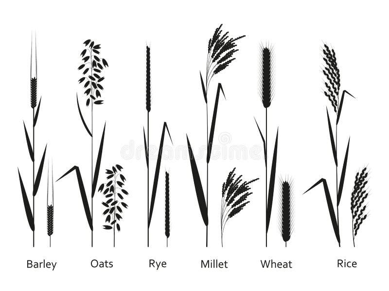 Plantas de los cereales fijadas Fuentes de los carbohidratos stock de ilustración