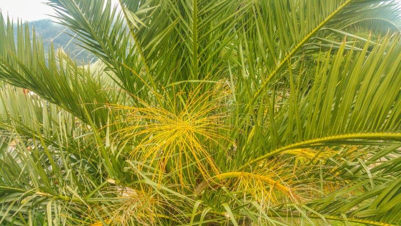 Plantas de Madeira fotografía de archivo