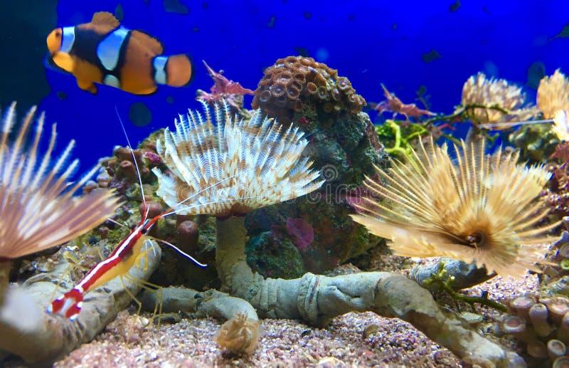 Plantas de mar coloridas fotos de archivo libres de regalías