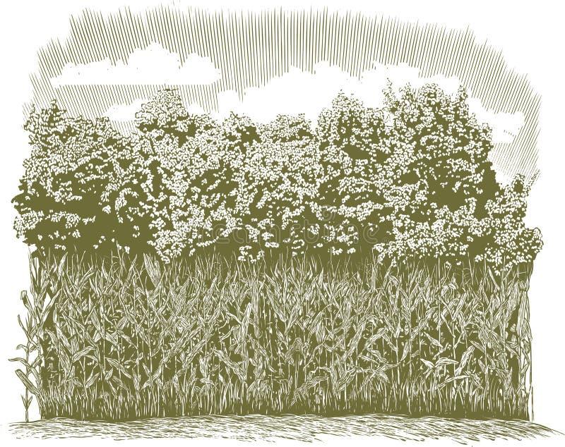 Plantas de milho do bloco xilográfico ilustração stock
