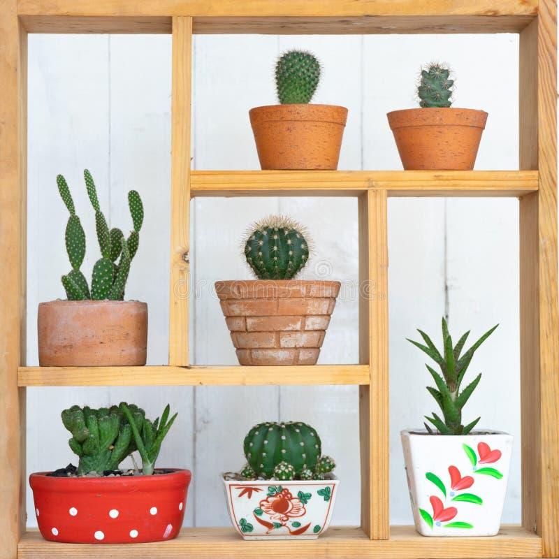 Plantas de potenci?metro suculentos pequenas decorativas na janela de madeira com luz morna da manh? imagem de stock