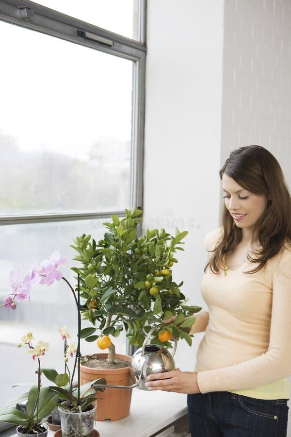 Plantas de riego de la mujer en el travesaño de la ventana fotografía de archivo libre de regalías