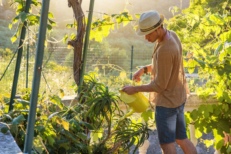 Plantas de riego del hombre joven en jardín imagen de archivo