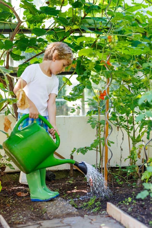 Plantas de riego del muchacho del niño en invernadero en verano imagenes de archivo