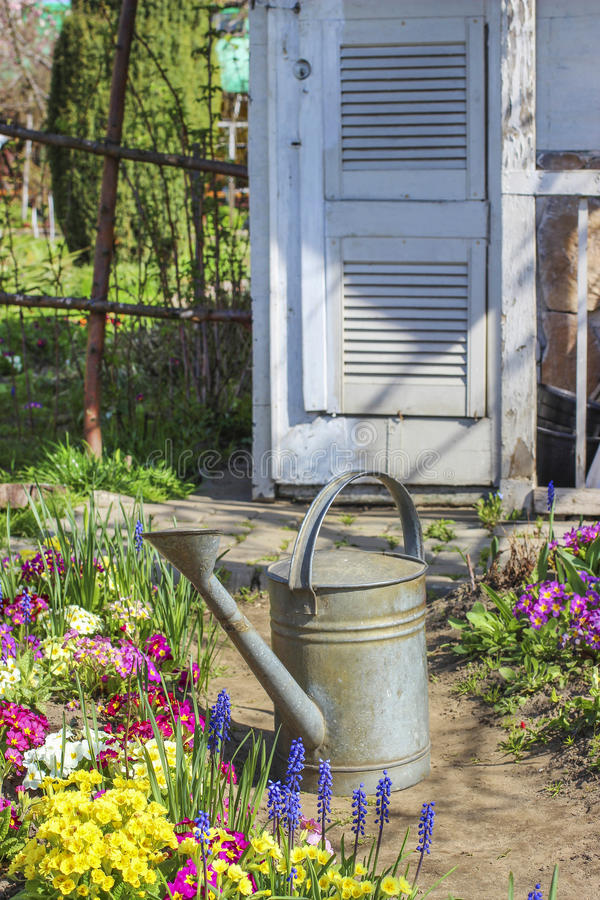 Plantas de riego en jardín hermoso de la primavera fotografía de archivo libre de regalías