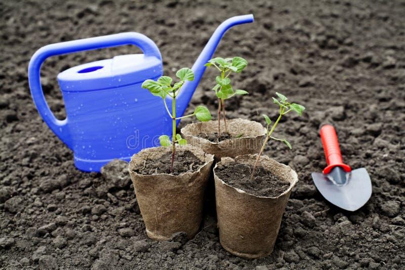 Plantas de semillero imagen de archivo libre de regalías