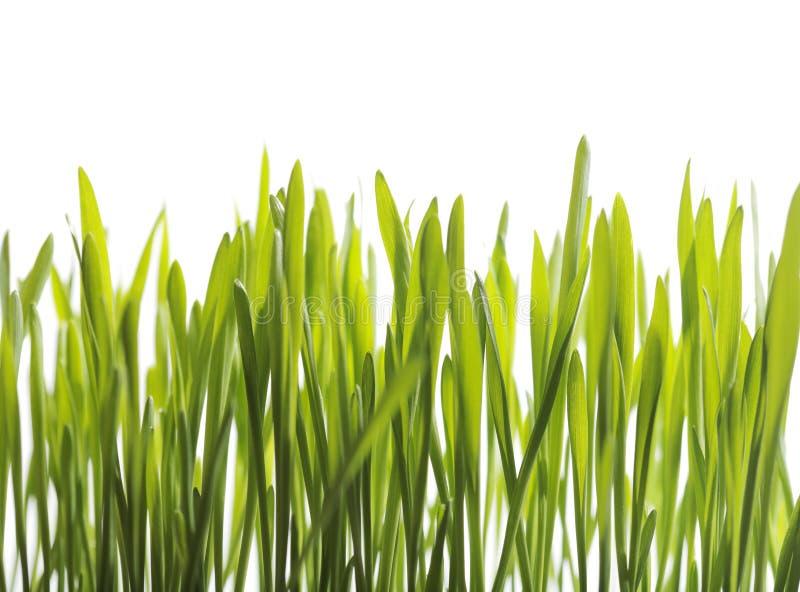 Plantas de semillero foto de archivo