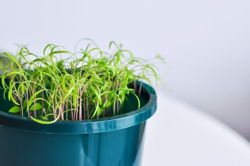 Plantas de semillero en un crisol imagen de archivo