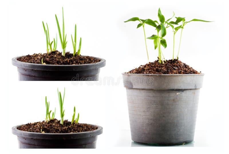 Plantas de semillero Potted imagen de archivo