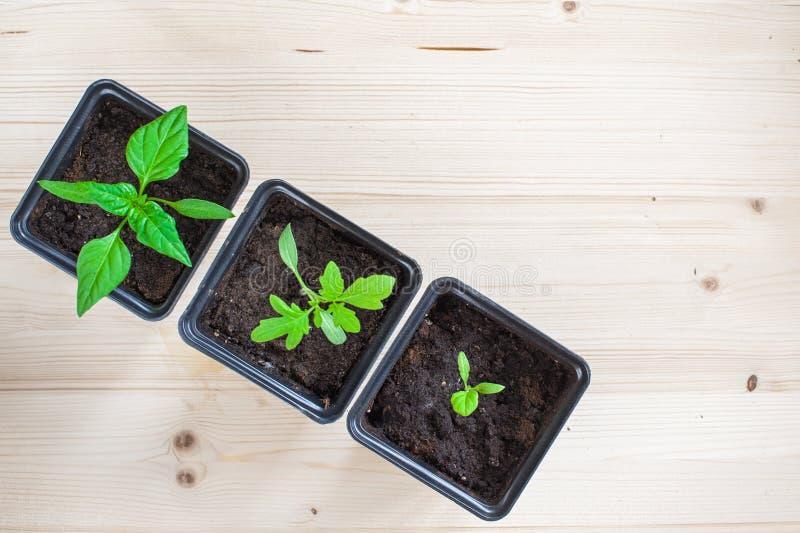 Plantas de semillero Potted fotos de archivo