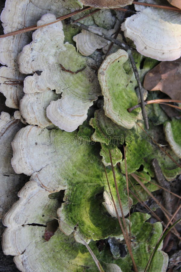 Plantas de Tejas imagen de archivo