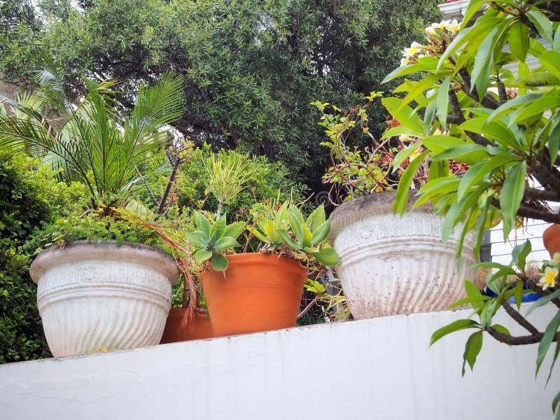 Plantas de tiesto encima de una pared pintada blanco fotografía de archivo