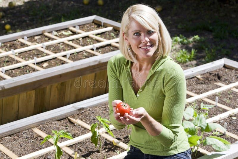 Plantas de tomate crecientes de la mujer en plantador del patio trasero fotografía de archivo