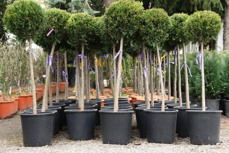 Plantas decorativas imagem de stock imagem de tipos for Plantas decorativas tipos