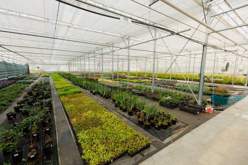 plantas decorativas, arbustos Multi-coloridos e flores crescidos jardinando na estufa moderna com sistema de controlo do clima foto de stock royalty free