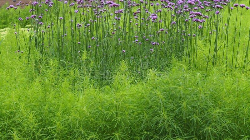 Plantas decorativas em um canteiro de flores no parque fotografia de stock